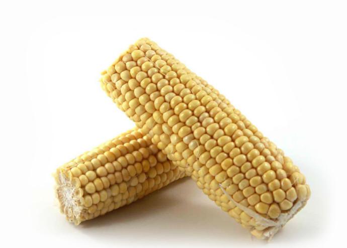 białko w karmie