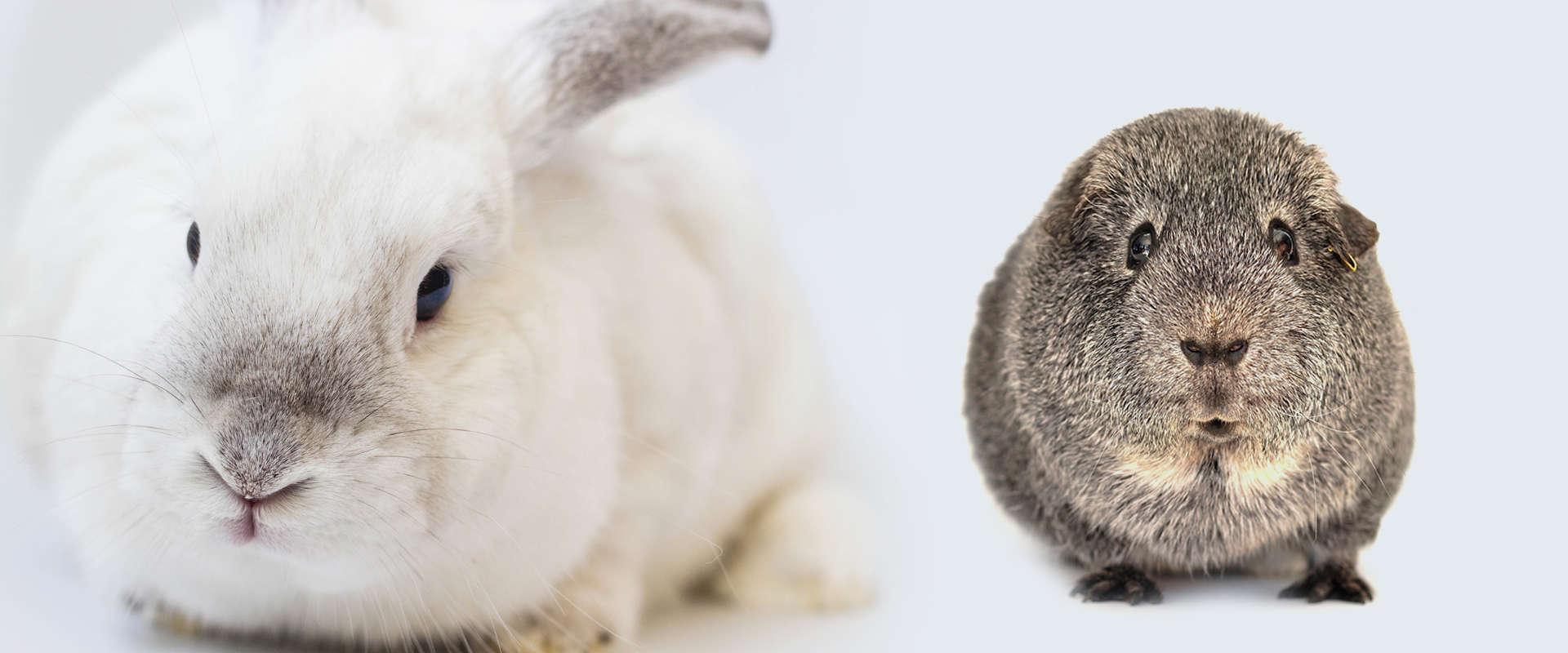 królik świnka karma granulat